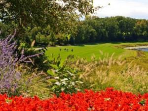 Golfcourse-in-bloom-1024x679